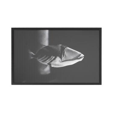 Framed Greyscale Fish Artwork